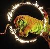 Цирки в Горном